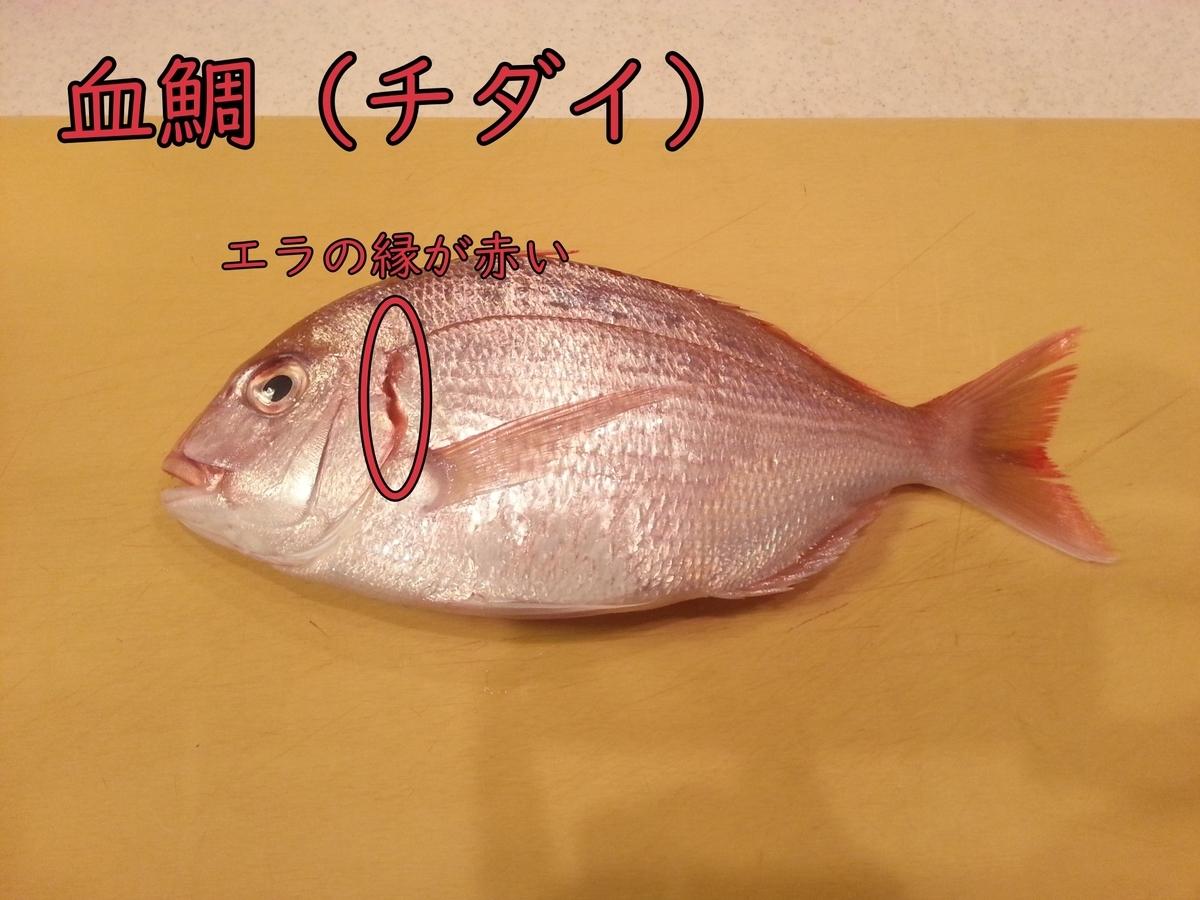 真鯛と血鯛の違い