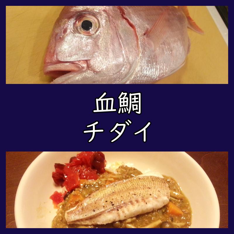 チダイ 血鯛