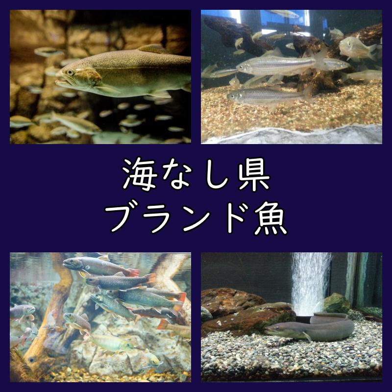 海なし県(内陸県)のブランド魚