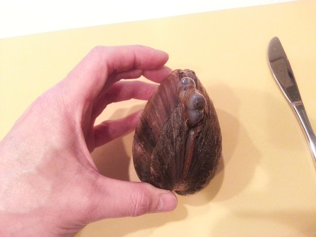 ホッキ貝の捌き方(食べ方)