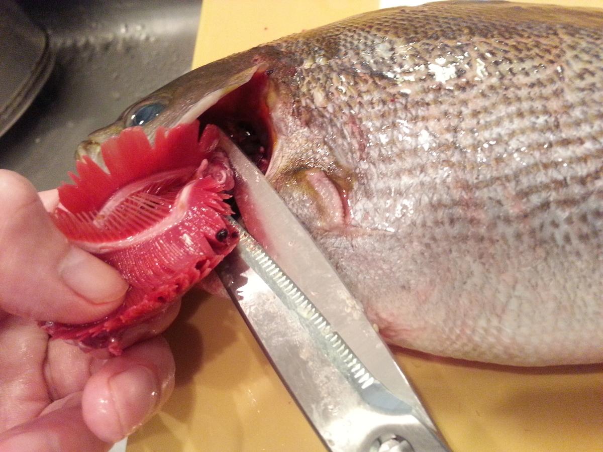 キッチンバサミで魚を処理する