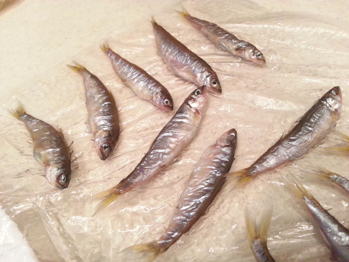 琵琶湖の小鮎 一夜干し(干物)作り方