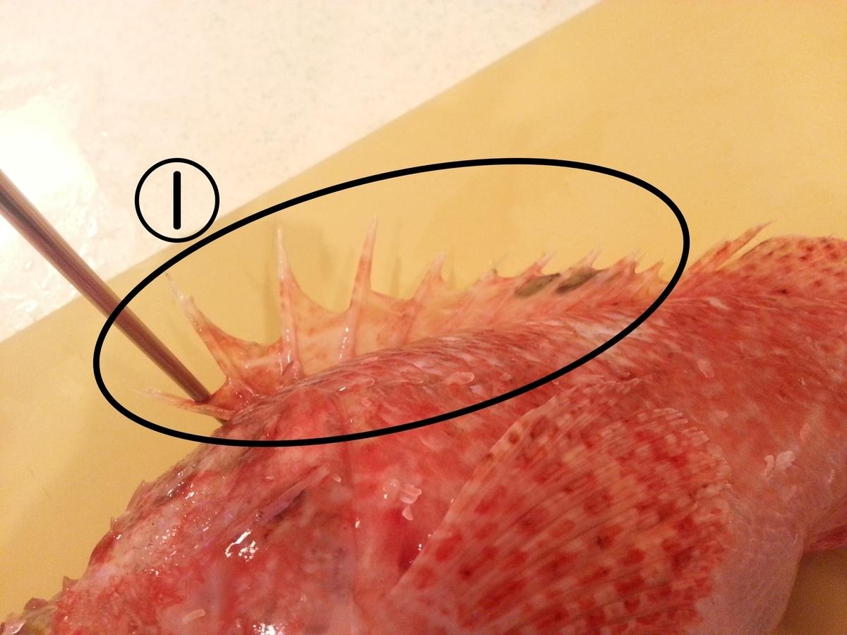 イズカサゴ(オニカサゴ)の毒針(トゲ)の位置