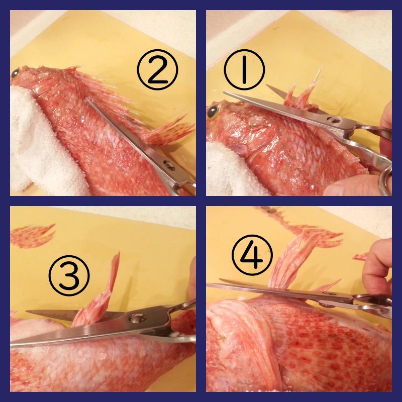 イズカサゴ(オニカサゴ)毒針の処置方法