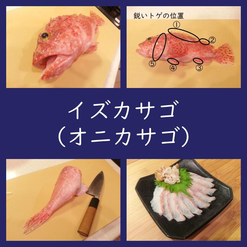 イズカサゴ(オニカサゴ)刺身、しゃぶしゃぶ、胃袋、ヒレ酒