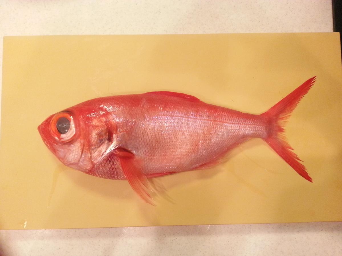 千葉県産 金目鯛
