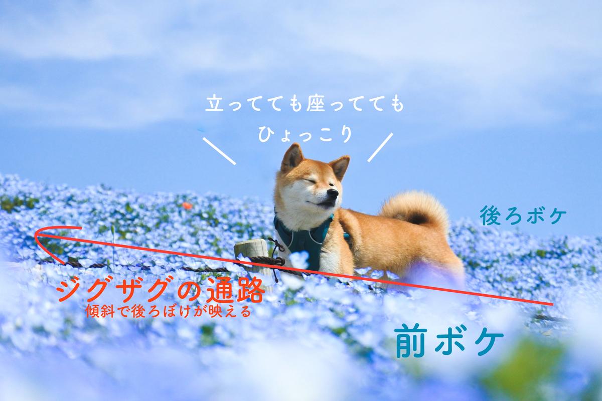f:id:Daikichi0906:20210510215850j:plain