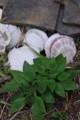 外川の植物