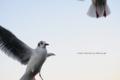 [海][飛ぶ][カモメ][横浜][みなとみらい]