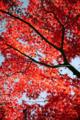 [高尾山][紅葉][山][秋][季節]