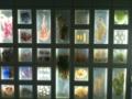 [生物]海藻標本展示パネル