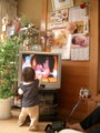 ビデオ鑑賞