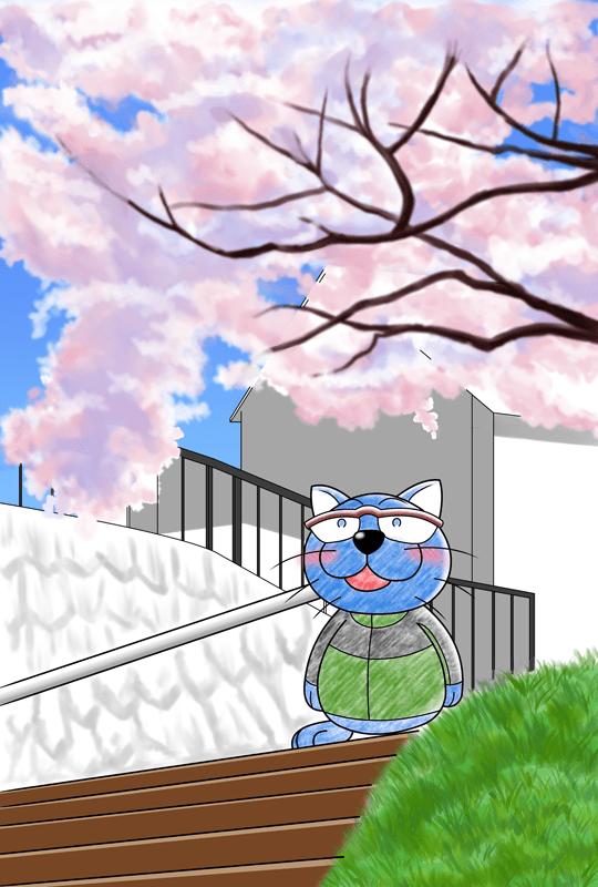 ドラねこ長野高遠桜