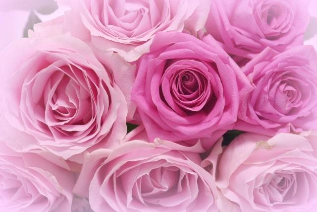 ふんわりとしたバラの花束