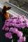 小菊とパルちゃん