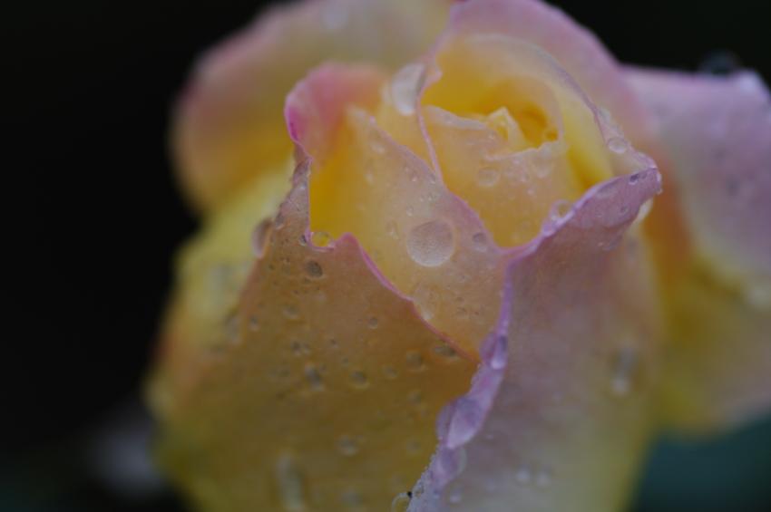 f:id:EAST-HIRO:20101128101110j:image