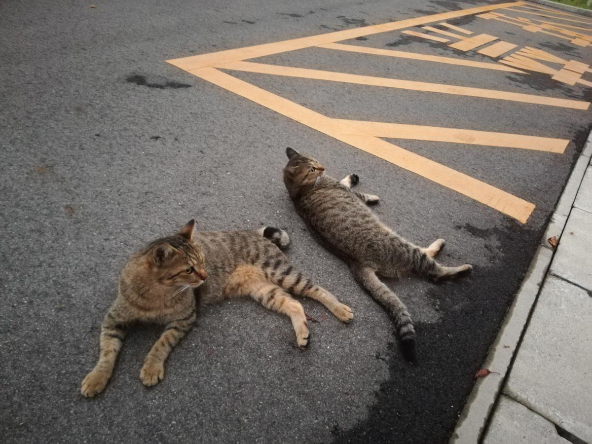 双子のネコ