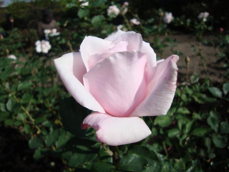 f:id:EPOM:20111112114614j:image:w360