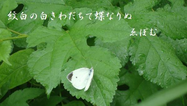 f:id:EPOM:20130730032933j:image