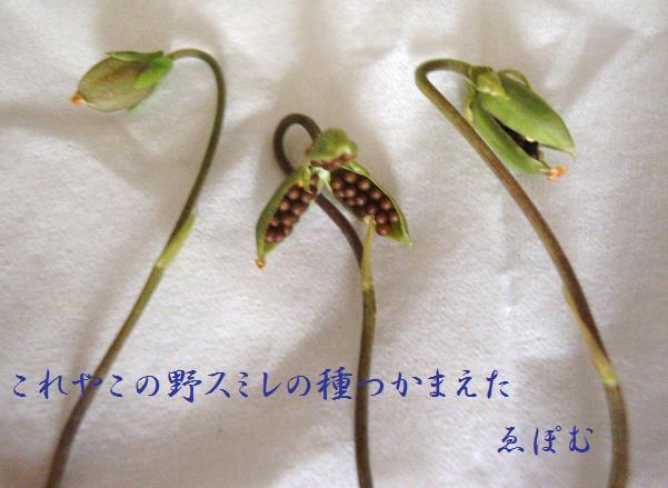 f:id:EPOM:20130801035049j:image