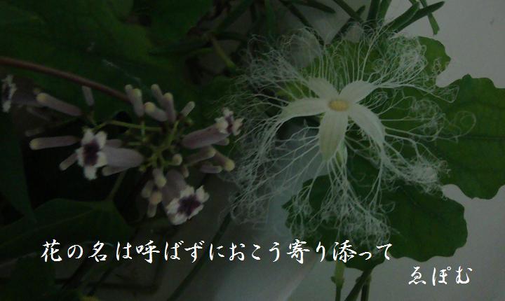 f:id:EPOM:20130809051744j:image