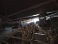 [海上自衛隊][しもきた][LCAC]キャットウォークより、ウェルドックを見下ろす。