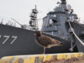 [海上自衛隊][鳥][風景]八戸港の岸壁にて。