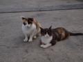 [猫]舞鶴市の親海公園に集う猫様。