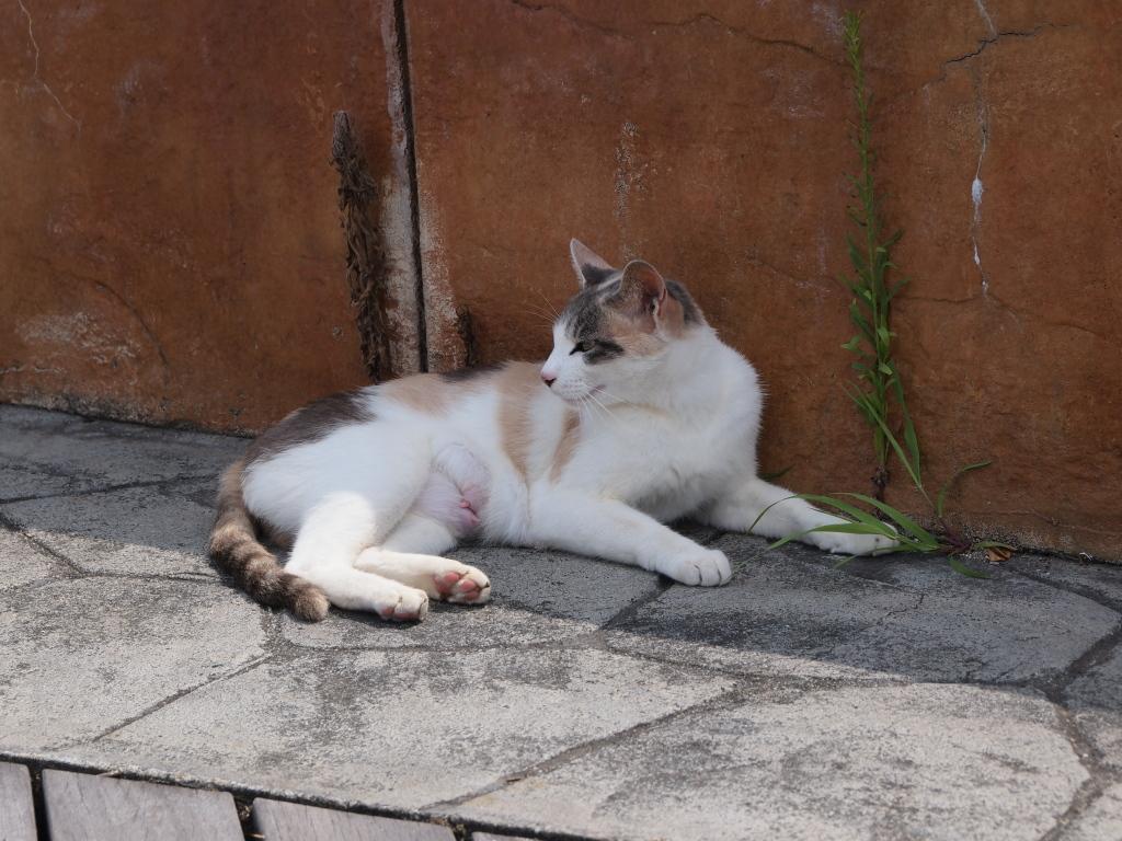 舞鶴市の親海公園でお休み中の猫様。