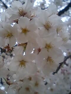 f:id:EijiYoshida:20080328145804j:image