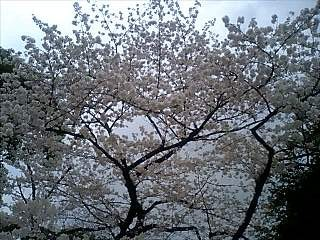 f:id:EijiYoshida:20080328145823j:image