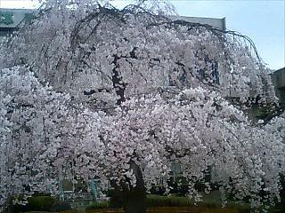 f:id:EijiYoshida:20080328150540j:image