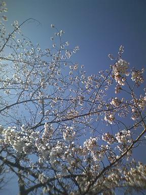 f:id:EijiYoshida:20110404143517j:image