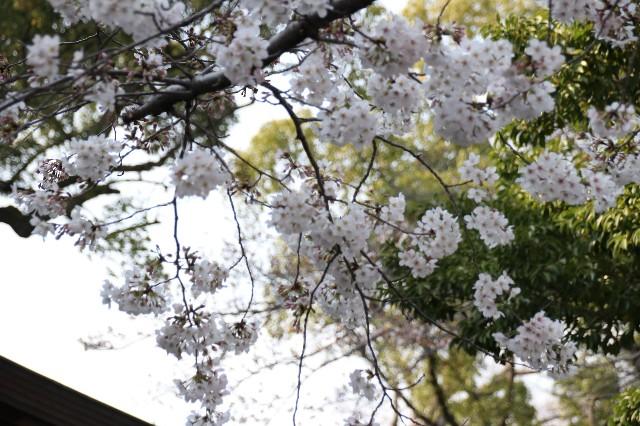 f:id:Eiyoku_JK:20180327030227j:image