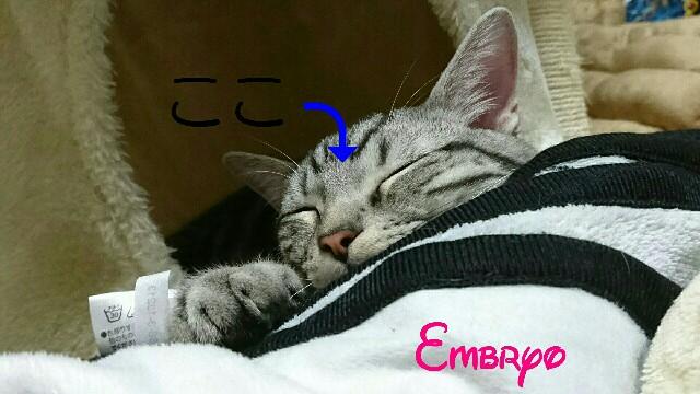 f:id:Embryo:20161127010339j:image