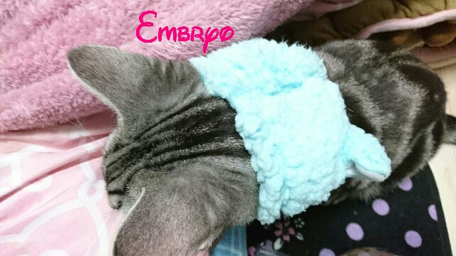 f:id:Embryo:20161205083922j:image