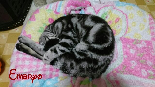 f:id:Embryo:20170108145808j:image