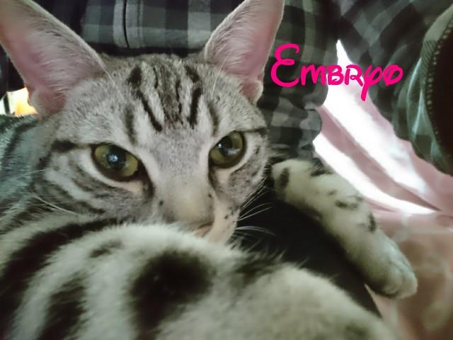 f:id:Embryo:20170127013507j:image