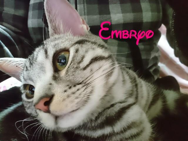 f:id:Embryo:20170127013651j:image