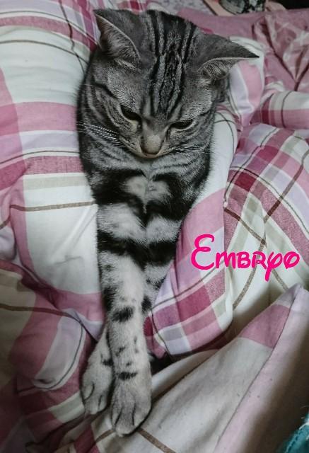 f:id:Embryo:20170512223621j:image