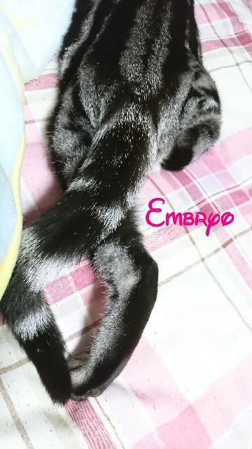 f:id:Embryo:20170520230757j:image