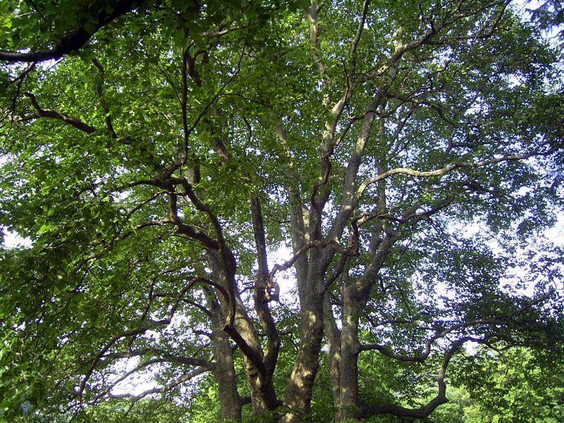 f:id:Emmaus:20070523154112j:image