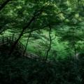 ikutaforest