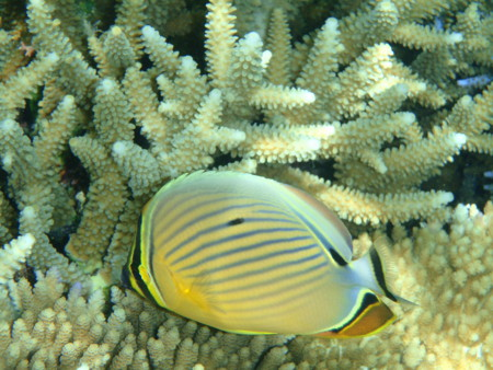 f:id:Europedia:20110630134710j:image