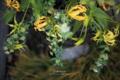 倉敷市中央の風景写真 - 工房IKUKOの生け花
