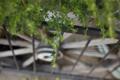 植木鉢の葉-ベランダの風景/岡山市北区表町にて