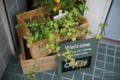 ディスプレイ-植木鉢/岡山市北区表町にて