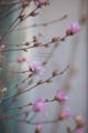 岡山県立美術館の花-モネの庭/岡山市北区天神町にて