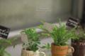 植木鉢の風景-葉/岡山市北区表町にて
