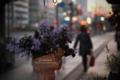 夕暮れの街角-花のある風景/岡山市北区天神町にて